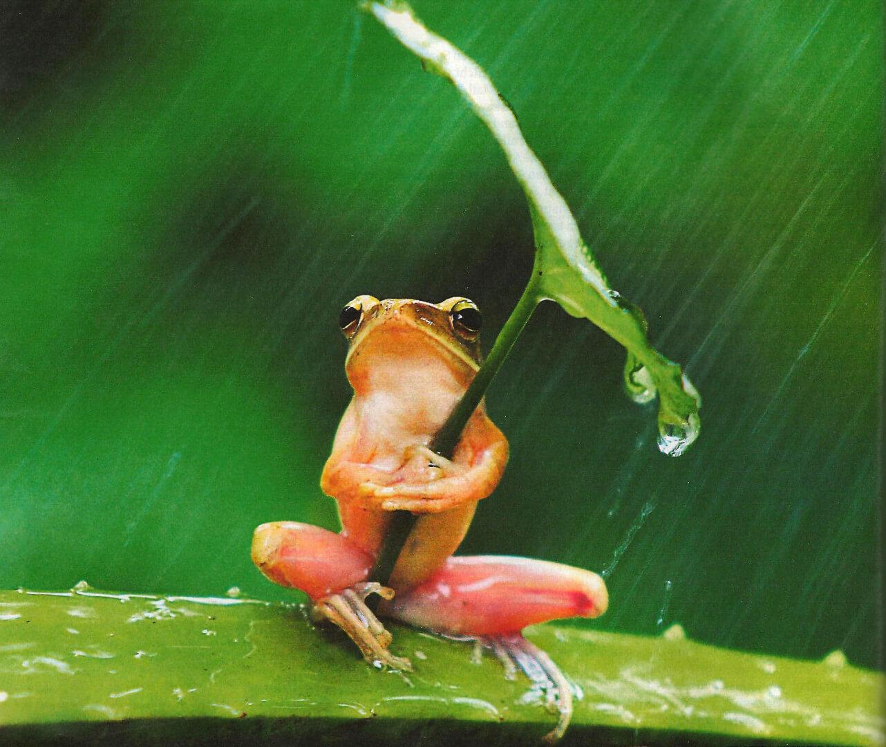 Scheiss Wetter